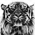 Brenny & the Tiger HEAVEN & hell 0049 (Affliction)