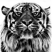 Brenny & the TIGER - Free Online Music