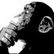 lemacaque9 - Free Online Music