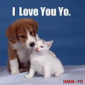 HAHA-YO - I Love You Yo